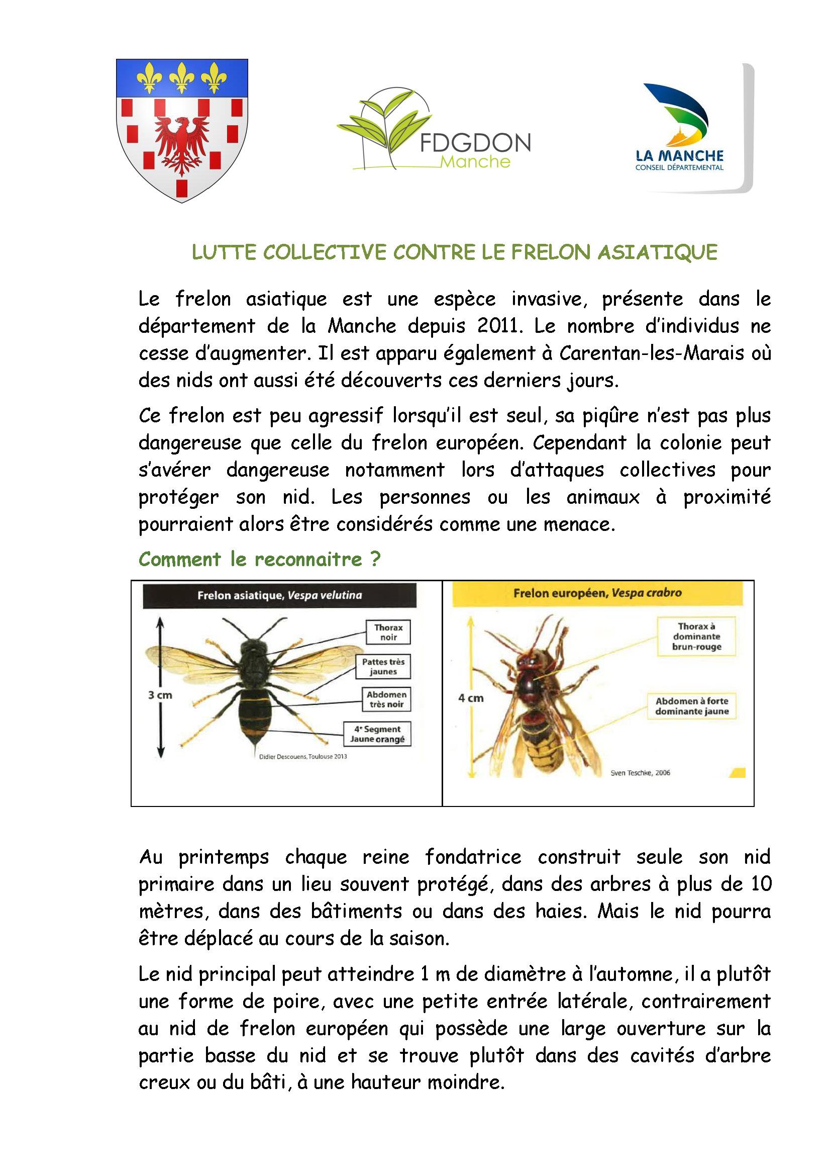 Lutte contre le frelon asiatique - Ville de Carentan les ...