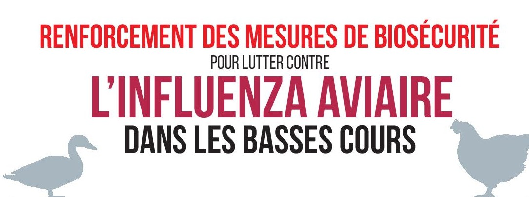 biosecurite_basse-cour-page-001